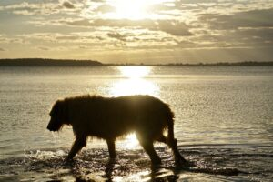 Scottish power animals